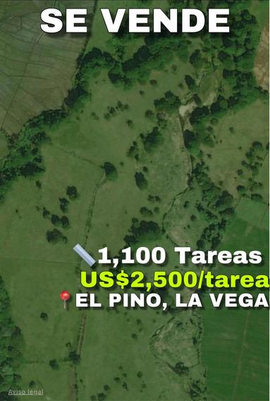 Se Vende 1,100 Tareas En El Pino La Vega