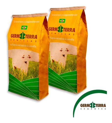 Semillas Pasto Brachiaria Brizantha Marandu Imp Brasil X 1kg