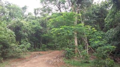 Fazenda Em Caseara -to, Dupla Aptidão - 377