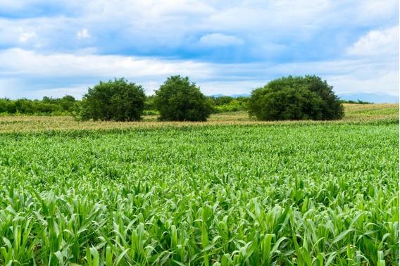 Campo Agricola En Venta Villa Del Rosario 165 Ha Oportunidad
