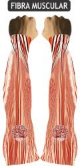 Manguito Fibra Muscular Muhu Cod 416