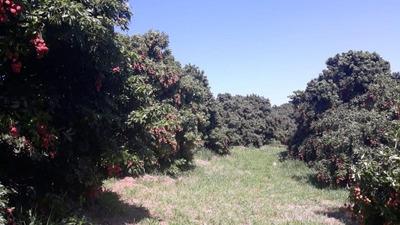 Fazenda À Venda, 1161600 M² Por R$ 10.000.000 - Rural - Santo Antônio De Posse/sp - Fa0156