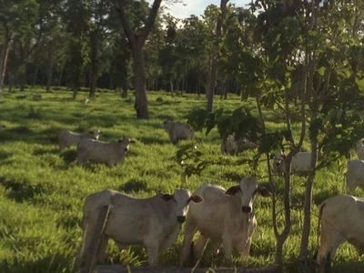 Fazenda A Venda Em Barão De Melgaço - Mt (pecuária) - 990