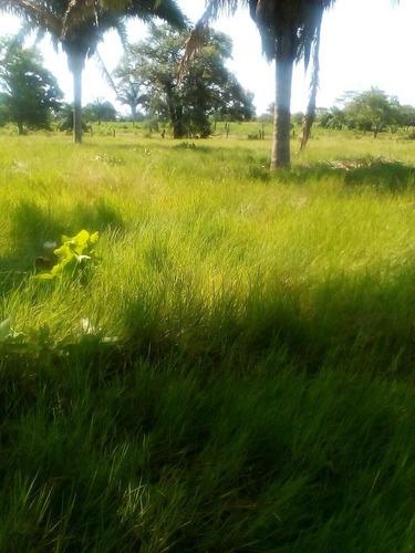 hermoso rancho ganadero