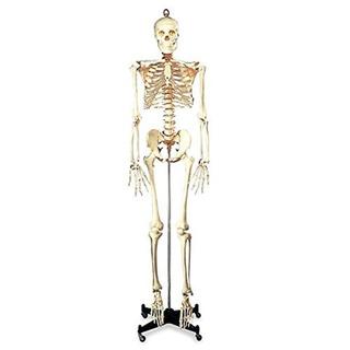 Esqueleto - Presupuesto Bucky Numbered Por