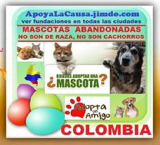 Gratis, Adopta, Perros, Gatos, Abandonados, Fundacion