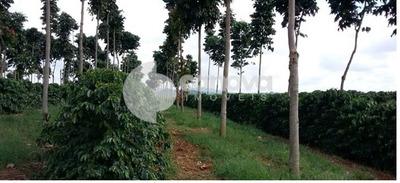 Fazenda À Venda Em Centro - Fa000729
