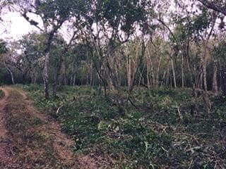 Terreno Campestre En Venta, Berriozabal, Chiapas