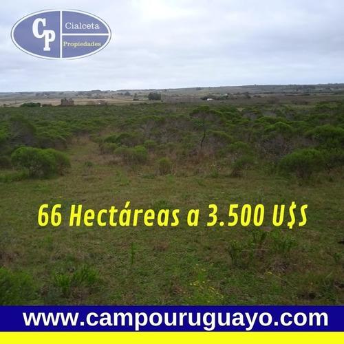 66 Hectáreas En Canelones