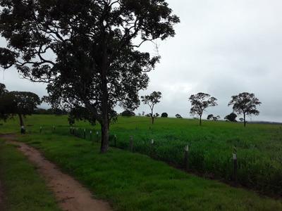Fazenda A Venda Em Rio Negro - Ms - 1135