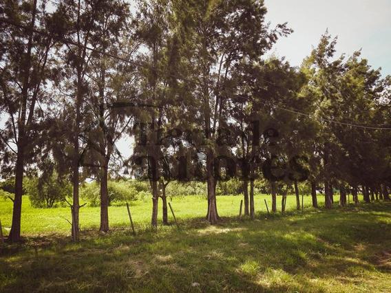 Terrenos A La Venta En Pueblo Esther - Barrio Parque Vernazza