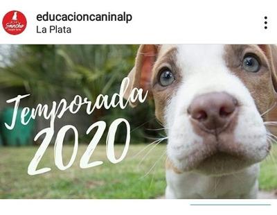 Sesion On Line Adiestramiento Ladran Sancho Educacion Canina