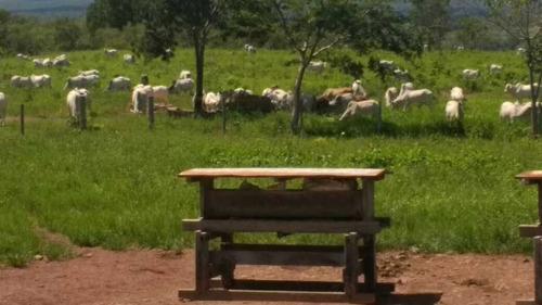 Fazenda Para Cria E Recria C/ 1.250 Hectares 6.000,000,00 - 40133