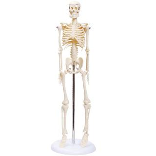 Kit Esqueleto Humano Com 45 Cm E Torso 28 Cm Assexuado