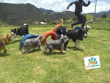 Guarderia Canina Campestre En La Calera