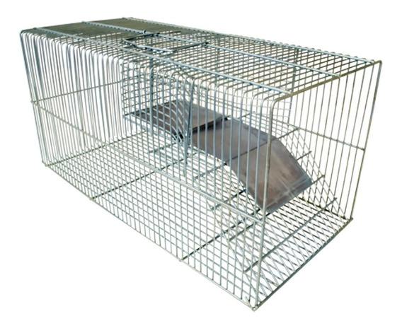 Ratoeira Grande Saída Lateral Ratos Ratazanas Camundongos
