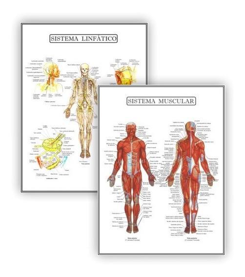 Kit 2 Posteres Anatomia Med Educação Física Fisiologia 30x40