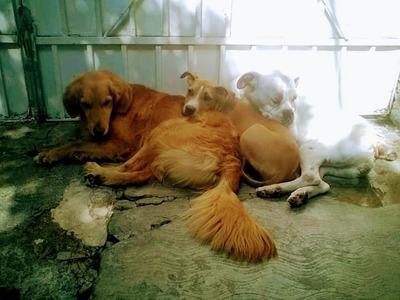 Paseos De Perros