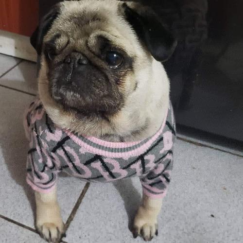 Colita Enroscada Pug Carlino