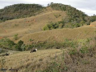 Fazenda Para Venda Em Sumidouro, Aparecidinha, 5 Dormitórios, 1 Suíte, 1 Banheiro - Fp02_1-485091