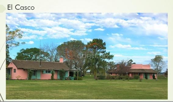 Campo En Uruguay, Paysandú- Ref: 26170