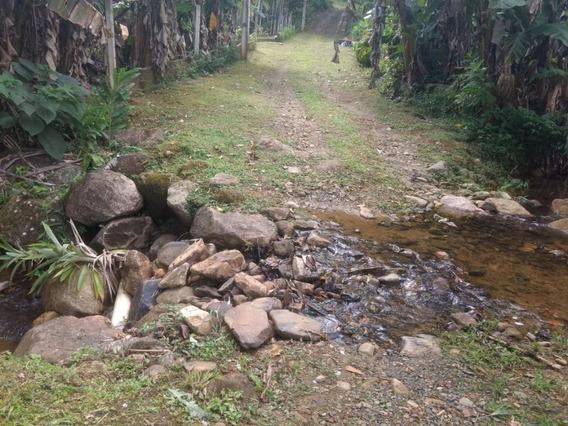 Terreno À Venda Fundos Para O Rio, 1700 M² Por R$ 55.000 - Rio Sagrado - Morretes/pr - Te0079