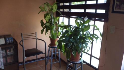 Apartamento Monoambiente Divisible En Centro De Colonia,,,