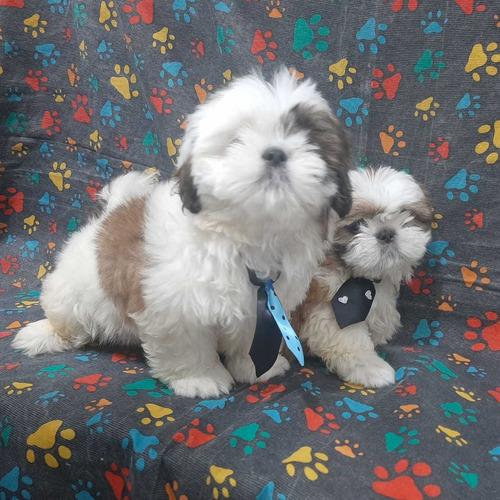 Imagem 1 de 2 de Vendo Cachorro