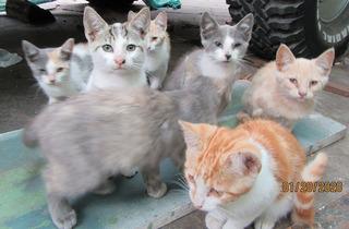 Para Adopción Hermosos Gatitos En Viña Del Mar