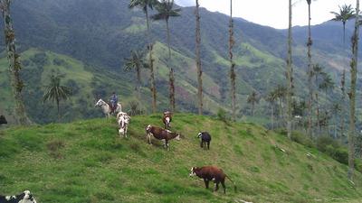 Hacienda Ganadera Y Cultivos