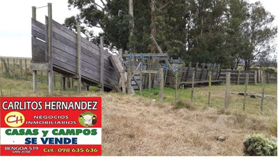 En Tacuarembo Necesitamos Campos P Arrendar Con Garantia