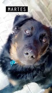 Perro Cachorro Cachorron En Adopcion