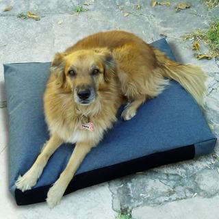 Cama Para Perros Colchon Antidesgarro Impermeable 100x70x12