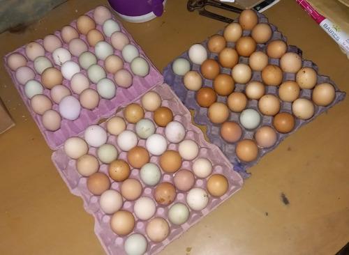 Imagen 1 de 8 de Huevos Fertiles