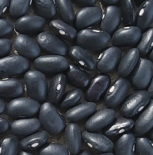 Semilla Caraota Negra Local Campesina Alto Rendimiento