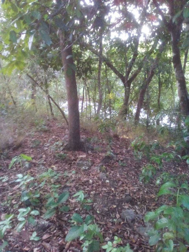 Imagem 1 de 4 de Imperdivel Chácara Na Beira Do Rio Prata No Jalapão
