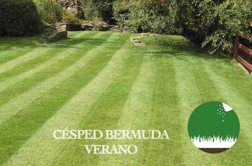 Imagen 1 de 6 de Semillas Césped Bermuda Ideal Verano - Canchas Jardines 25kg