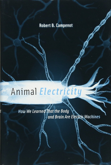 Animal Electricity The Body And Brain Are Electric Machines
