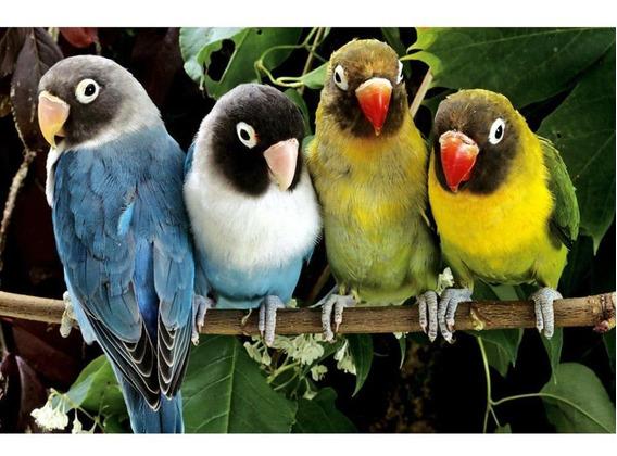 5d Diy Diamante Pintura Papagaios Cruz Ponto Bordado Strass