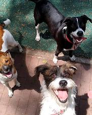 Paseos Caninos, Pensionado, Guarderia Y Baño.