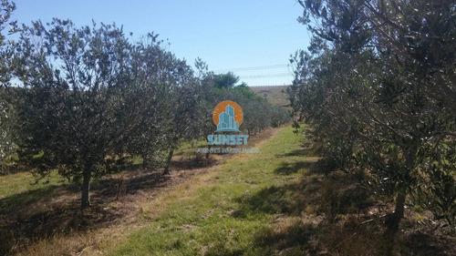 Punta Ballena Laguna Del Sauce Chacra 5 Has Con  Plantación De Olivos - Ref: 296