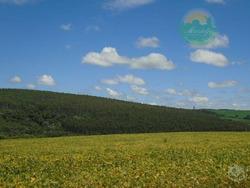 Fazenda 88 Alq - Ventania - Fa0002