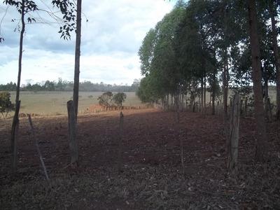 Chácara Para Comprar No Zona Rural Em Carmo Do Cajuru/mg - 1476