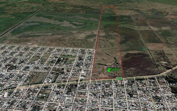 Campo Sobre Ruta 11, Emprendimiento, Casco Y Casa