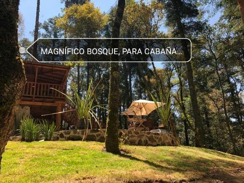Imagen 1 de 12 de Terreno En Venta Precioso Bosque Para Tu Cabaña!!
