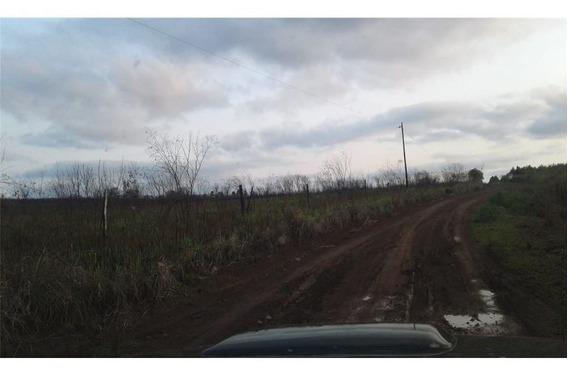 Campo 25 Ha Para Forestación San Ignacio Misiones.