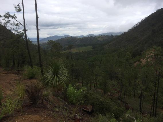 10 Hectareas, Hermoso Bosque (guadalupe Victoria, Canoitas)