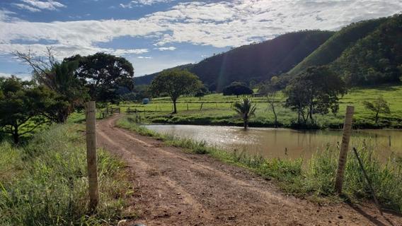 Fazenda Vereda - Próx. Mimoso De Goiás