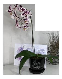 Orquídeas, Regalo Personalizado