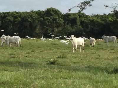 Fazenda 111 Ha Vitrine Br-364 Cuiabá X Rondonópolis - Fa0018